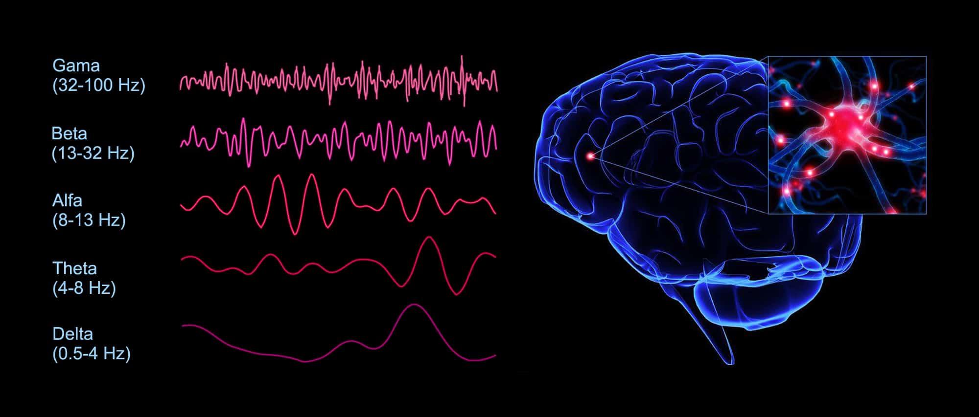 Frekvence možganskega valovanja